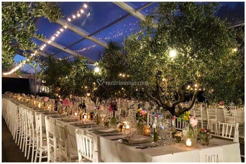 Wedding tra gli ulivi