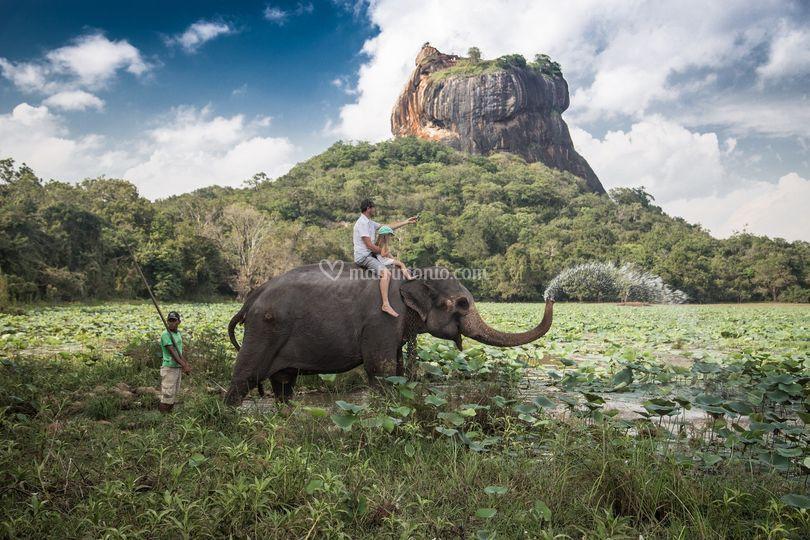 Esplora lo Sri Lanka