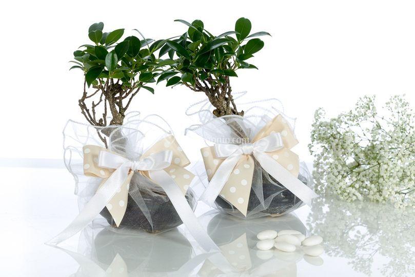 Bomboniere bonsai base
