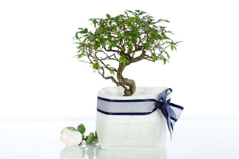 Secchielli per bonsai