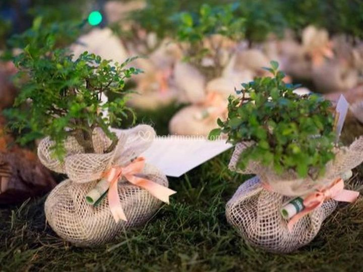 Bonsai con confezioni naturali