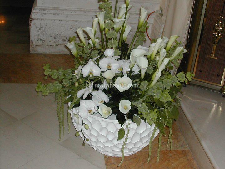 Pigna bianco di vivai piante masciandaro foto 10 for Vivai piante