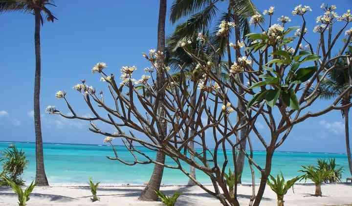 Karafu Zanzibar