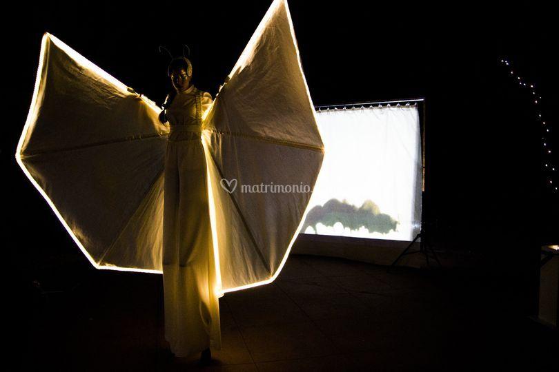 Nuovo spettacolo farfalla