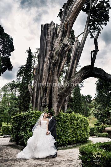 Sposi sotto l'albero
