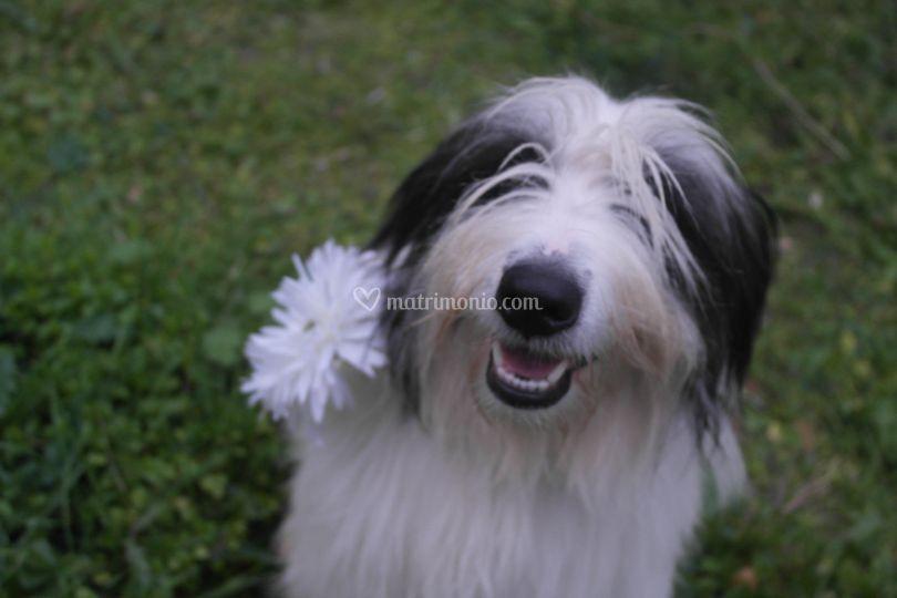 Pet Wedding Dog in posa