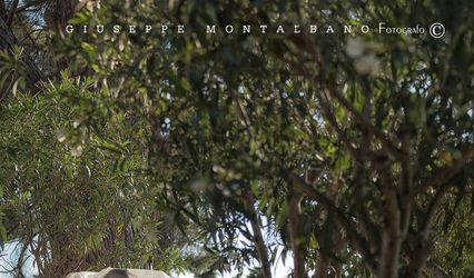 Montalbano Fotografi