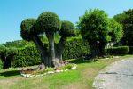 Giardino di Villa Gloria