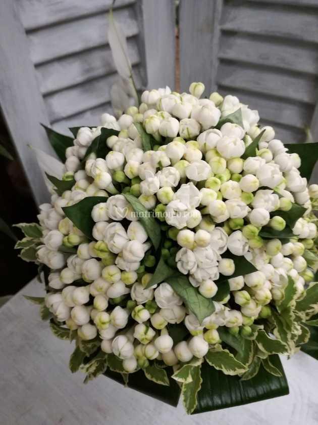 Bouvardia Bouquet Sposa.Bouquet Bouvardia Di Colombo Fiori Piante Foto 30