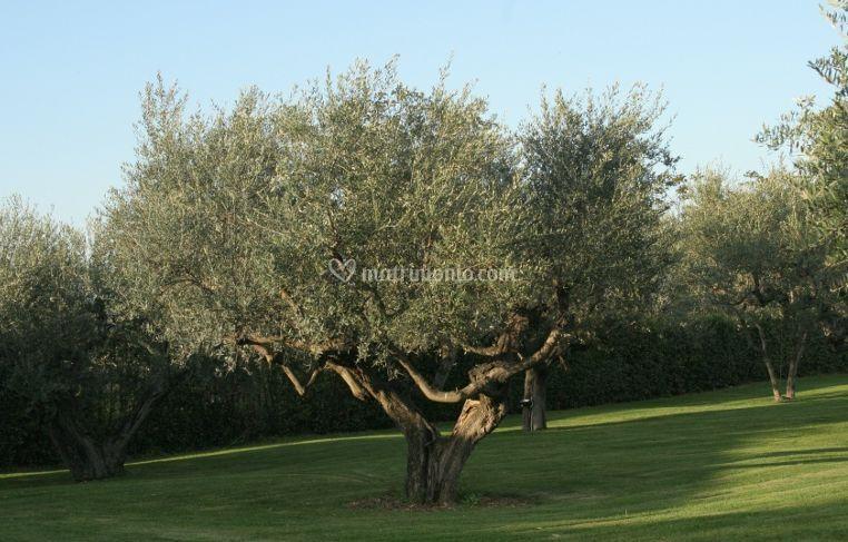 Giardino degli ulivi - Giardino con ulivi ...
