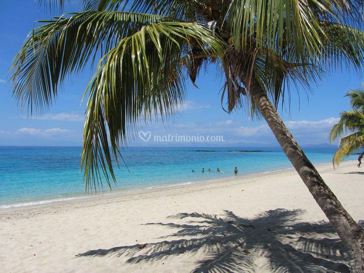 Spiaggia & palme