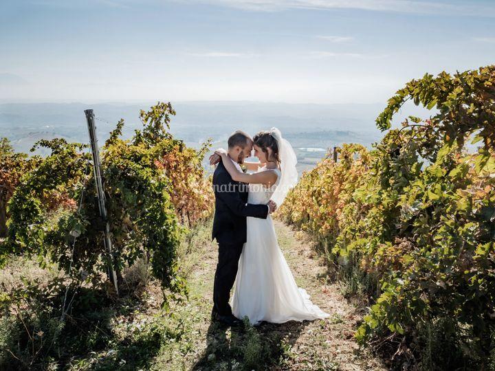 Fra le vigne pesaresi