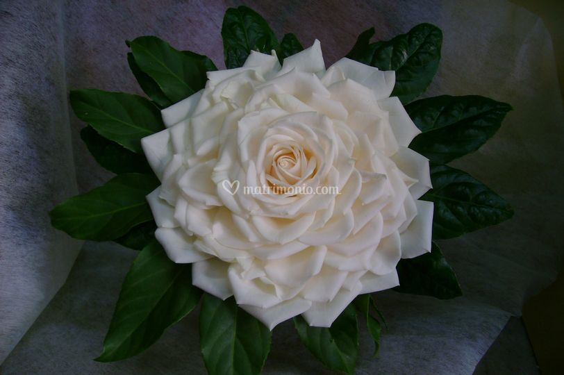 Bouquet glamelia vendela
