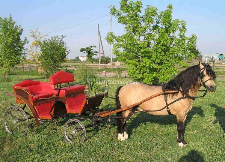 Carrozzella per pony