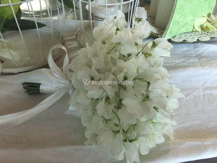 Bouquet di piselli odorosi bia