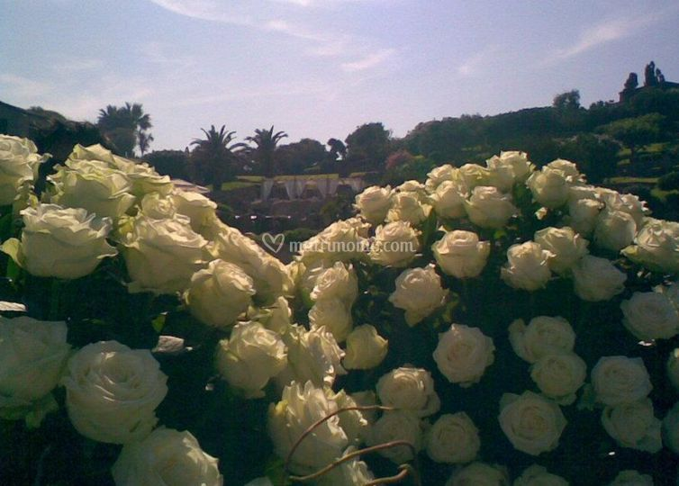 Air Flower's