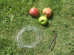 Ghirlande di mele