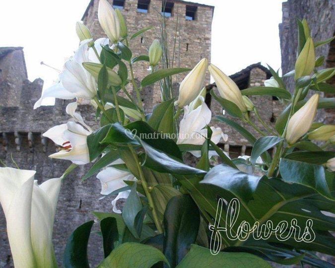Creazione Flowers Planet