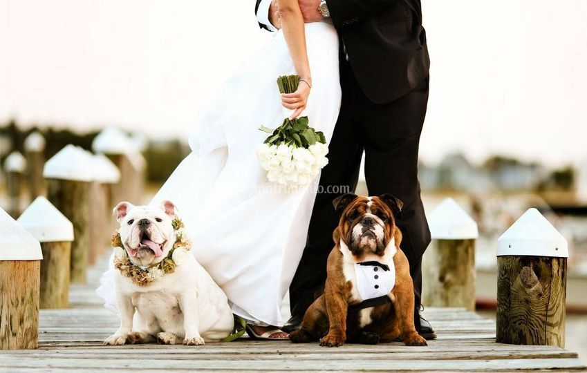 Love And Pets Wedding
