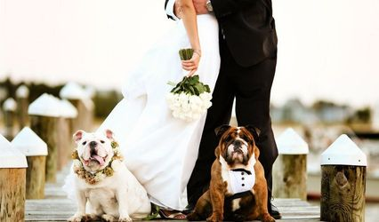 Love And Pets Wedding 1