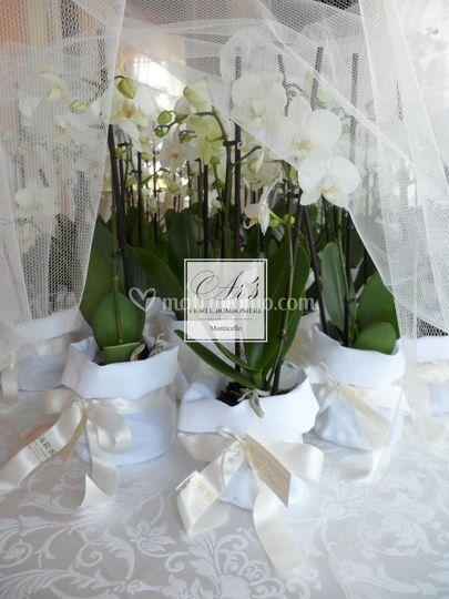 Matrimonio Tema Piante Grasse : Ar s fiori e bomboniere