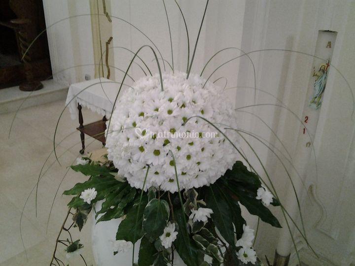 Margherite raigan bianco