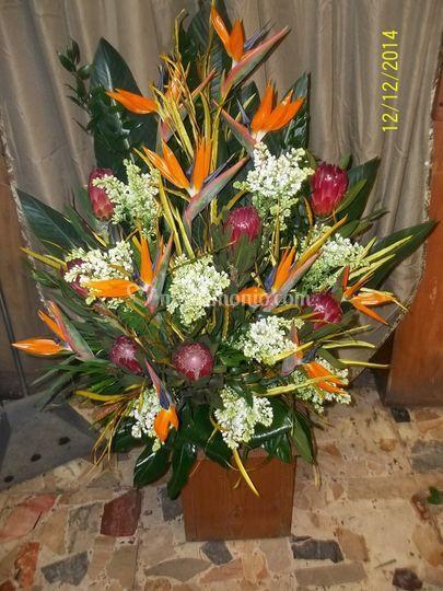 Composizine con fiori esotici