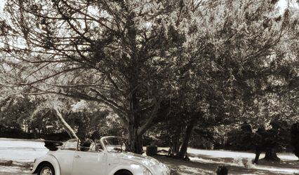 Dusty Old Cars 1