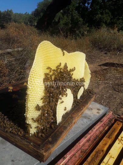 Il lavoro delle api