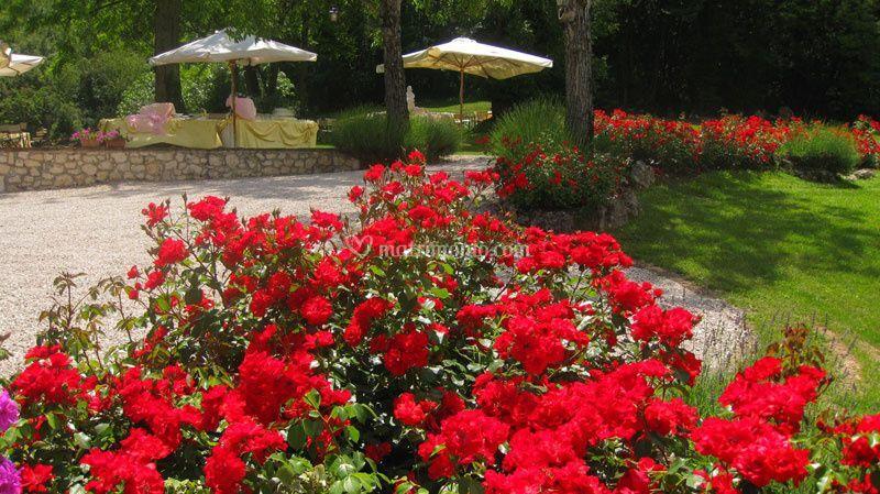 Giardino Delle Rose Di Ca 39 Del Sole Foto 2