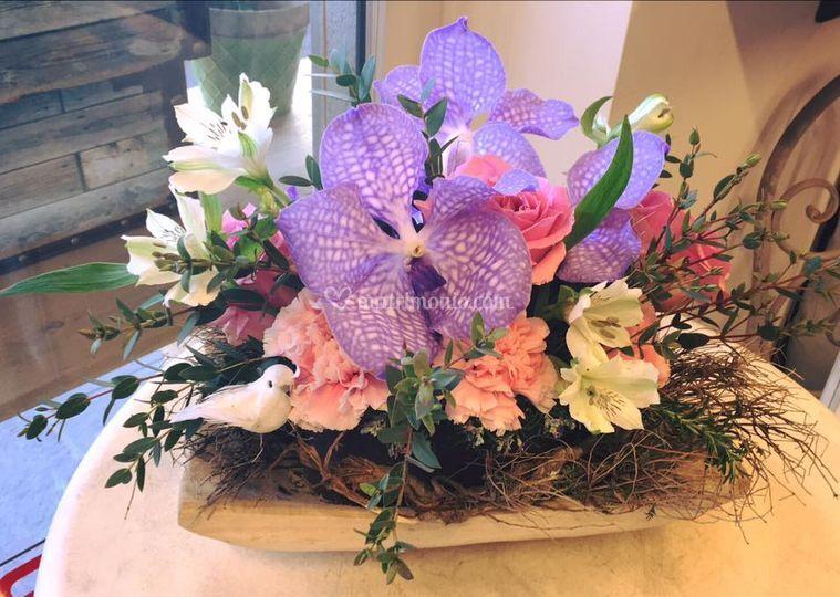 Orchidea vanda in composizione