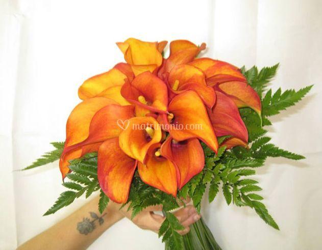 I fiori di sabina for Costo orchidea