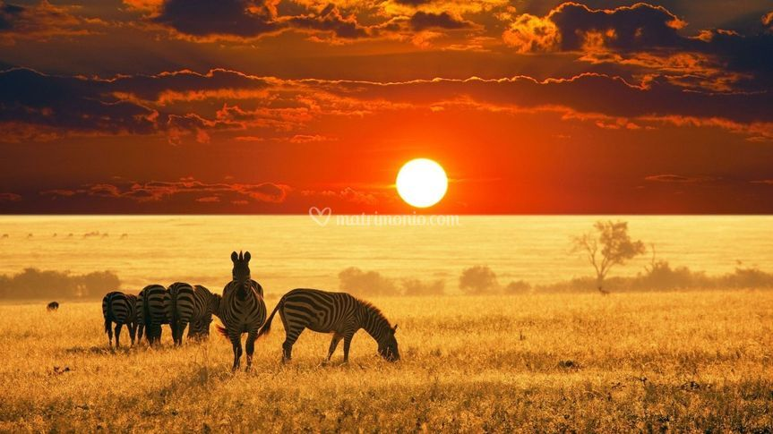 Parco Serengeti | Tanzania