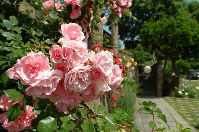 Particolare floreale