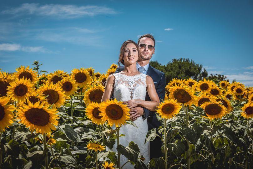 Girasoli e sposi