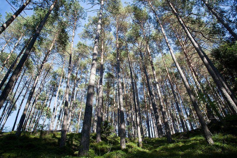Il bosco circostante
