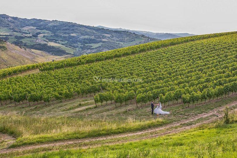Mare di vigne