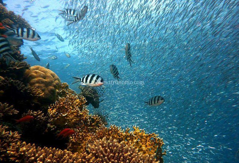 Viaggi per subaquei