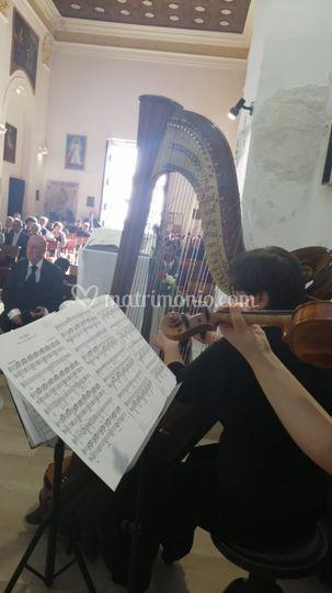 Infinito Wedding, Music, Events