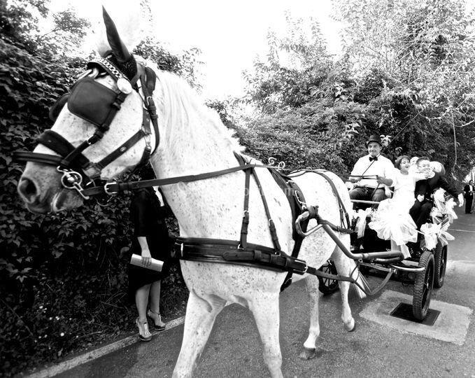 Cavallo con carrozza