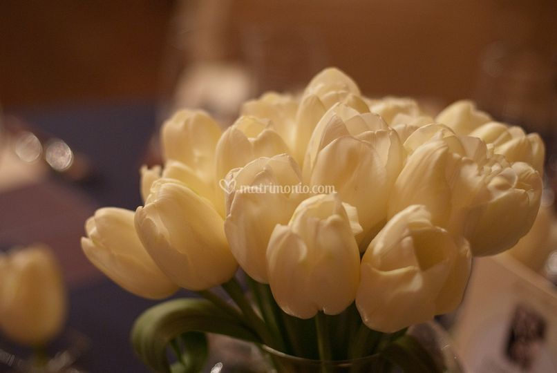 Bianchi tulipani...