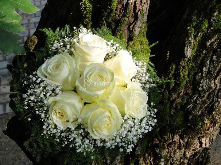 Matrimonio Tema Giardino Segreto : Il giardino segreto