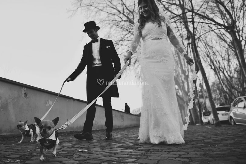 The bride, the groom and dogs!