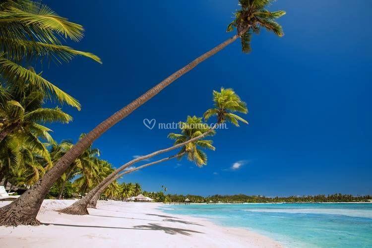 Welcome to: Fiji!