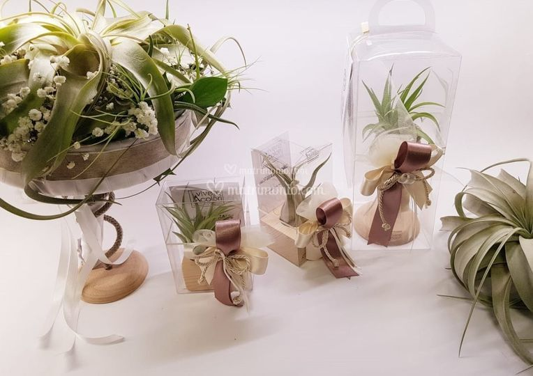 Set Principia con bouquet