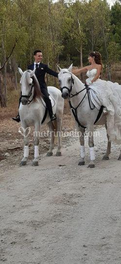 Giro a cavallo 2