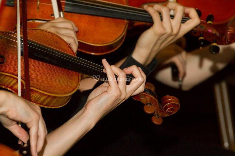 Violino Cerimonia