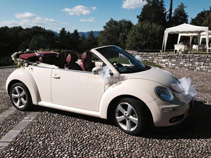 New beetle 1