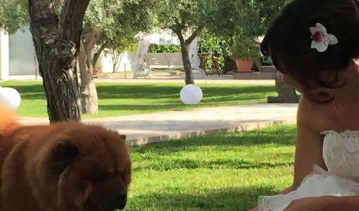Wedding Dog Apulia