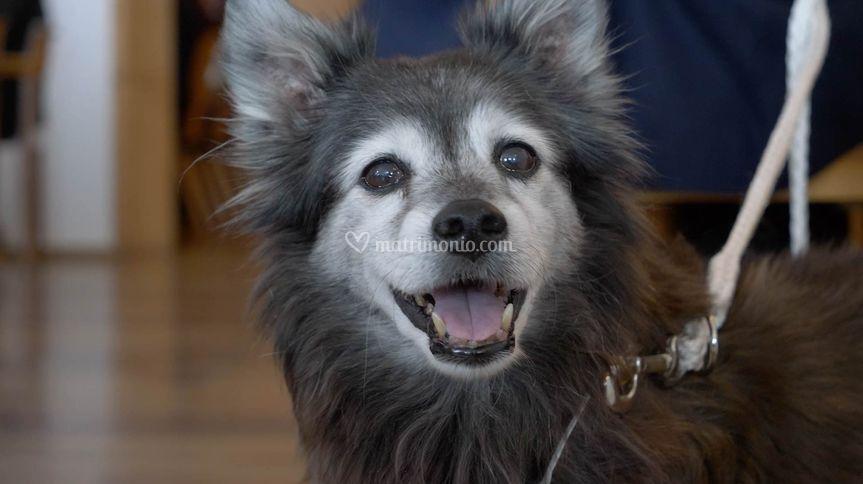 Dog- close up